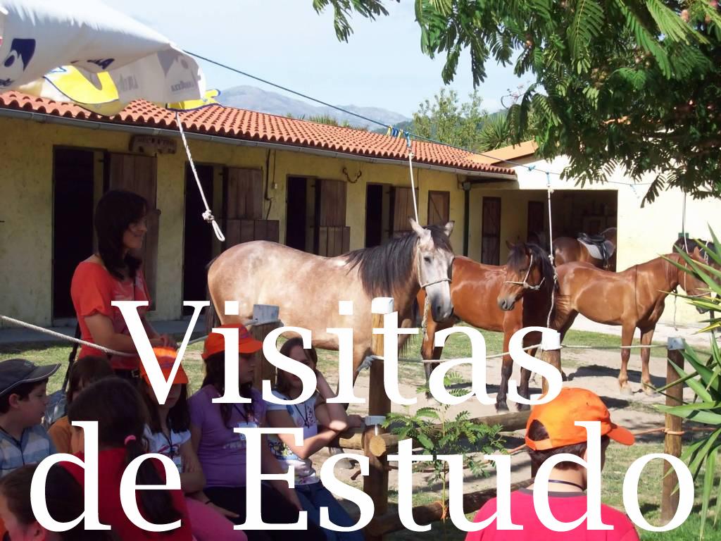 visitas